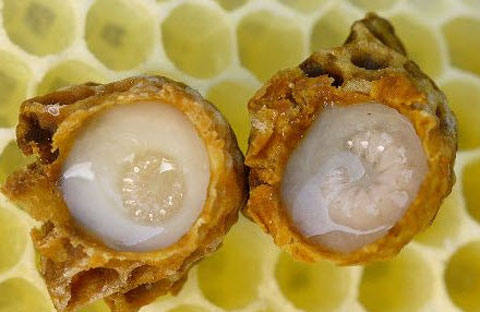 Cách phân biệt sữa ong chúa thật giả