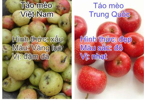 Làm thế nào nhận biết táo mèo Việt Nam chuẩn ngon đúng vị?