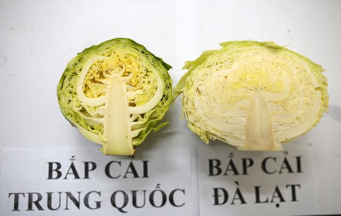 Cách phân biệt bắp cải ta và bắp cải Trung Quốc