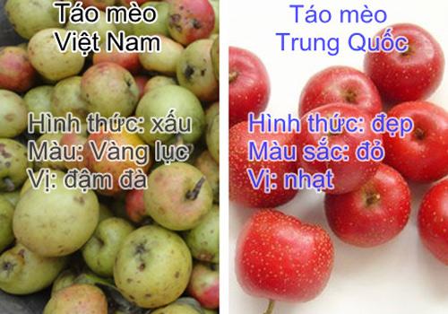 Sự khác biệt giữa táo mèo ta và táo mèo Trung Quốc