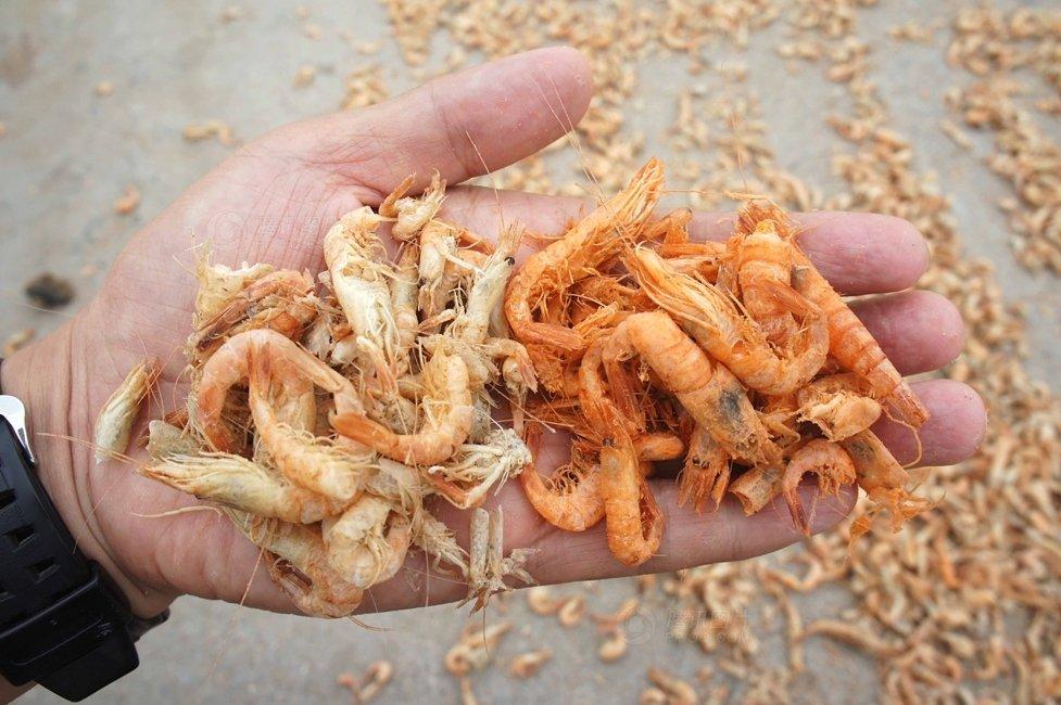 Dựa vào màu sắc có thể phân biệt tôm khô tự nhiên và tôm khô hóa chất
