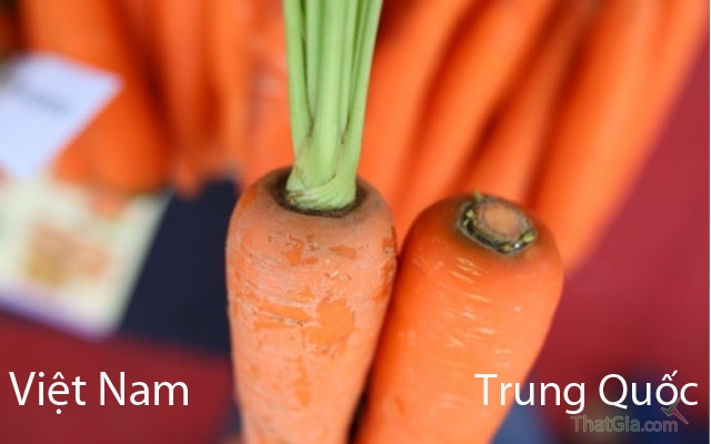 Cà rốt Trung Quốc không có rễ, cuống ,lá