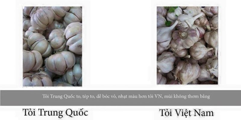 Mẹo hay phân biệt tỏi Việt Nam và tỏi trung quốc ?