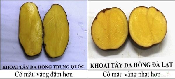 Phân biệt khoai tây Trung Quốc- khoai tây Đà Lạt qua ruột khoai