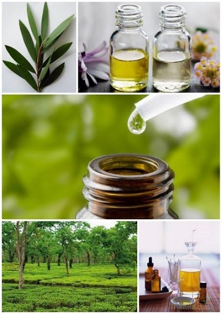 3 cách phân biệt dầu tràm nguyên chất