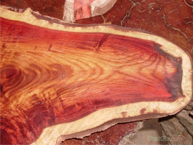 Phân biệt gỗ sưa thật và giả