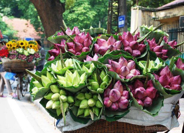 Phân biệt hoa sen và hoa quỳ để tránh bị hớ khi mua