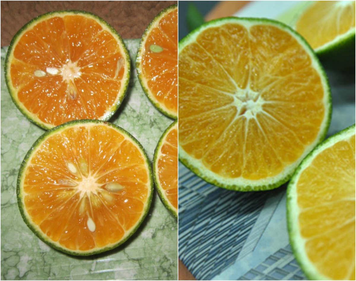 phân biệt cam Trung Quốc
