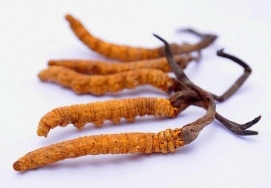 """""""Loạn"""" thị trường đông trùng hạ thảo, làm sao để nhận biết đông trùng hạ thảo thật giả?"""