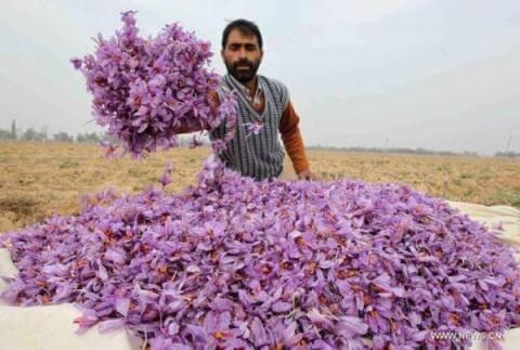 5 Cách Phân Biệt Nhụy Hoa Nghệ Tây Saffron Thật Và Giả